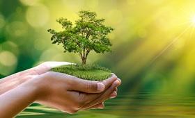 Baum wächst in Händen - Symbol für Nachhaltigkeit