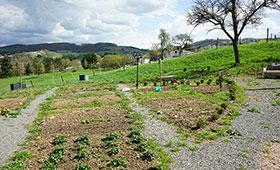 Anpflanzung von bedrohten und seltenen Nutzpflanzen im Frühjahr 2018