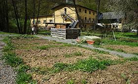 Anpflanzung der 'Kesselheimer Zuckererbse'